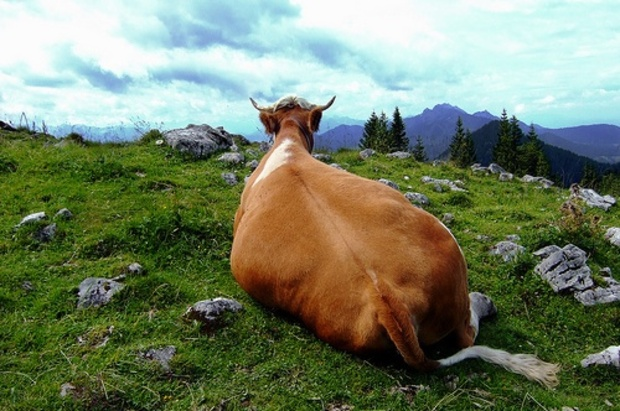 europaeische-union vegetarismus veganismus