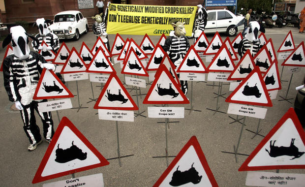 greenpeace aktivismus schuld